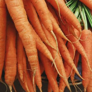 storing carrots
