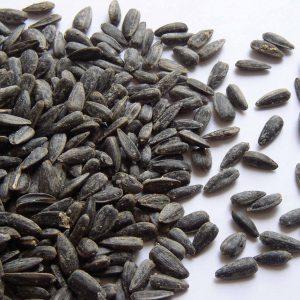 fresh and organic sunflower seeds